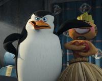 Фотография Шкипер (пингвин)