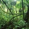 Фотография jungle